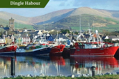 Dingle Habour |Deluxe Ireland Escorted Tours