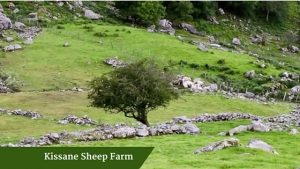 Kissane Sheep Farm | Family Tours Ireland
