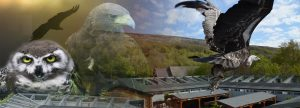 Ailwee Birds Of Prey | Luxury Family Vacations Ireland