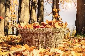 Autumn leaves in a basket
